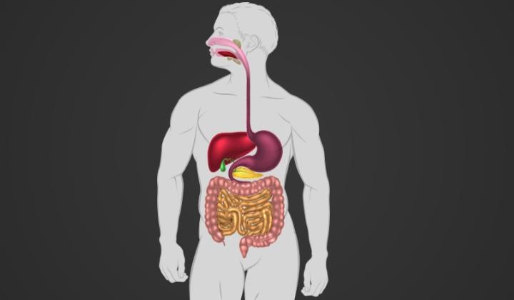 En tecknad bild på matsmätsmältningens anatomi.